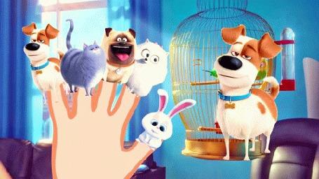 Анимация На руке человека животные, мультфильм The Secret Life of Pets / Тайная жизнь домашних животных