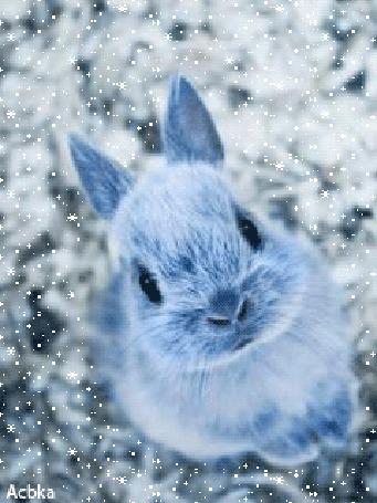 Анимация Кролик стоит на задних лапках под падающим снегом, подняв мордочку вверх, Acbka