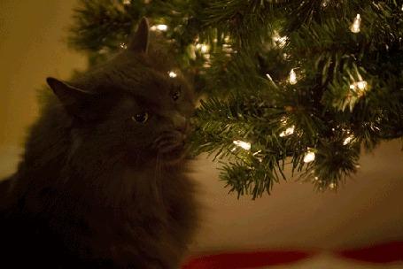 Анимация Кот жует ветку елки с гирляндой