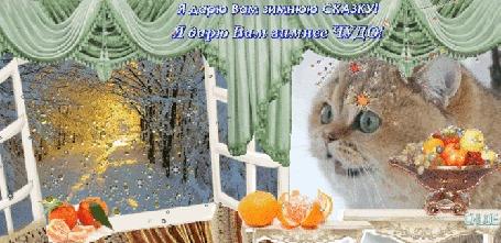 Анимация Удивительный котик смотрит в окно и ждет волшебного чуда и сказки, которые вот-вот произойдут, (Я дарю Вам зимнюю СКАЗКУ! Я дарю Вам зимнее ЧУДО!)