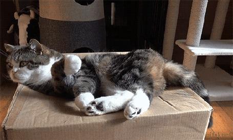 Анимация Кот проваливается в бумажную коробку