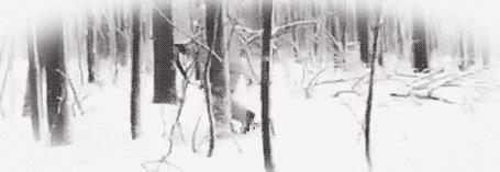 Анимация Человек с ружьем на зимней охоте