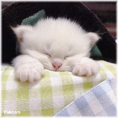 Анимация Дремлющий белый котенок, by Timzati
