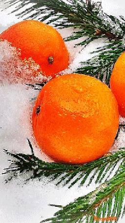 Анимация Апельсины и елочные ветки на снегу