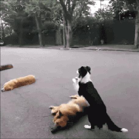 Анимация Пес перепрыгивает через собак, лежащих на дороге