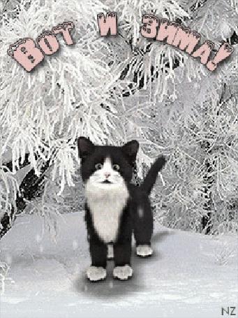 Анимация Черно-белый котенок под снегопадом, (Вот и зима)