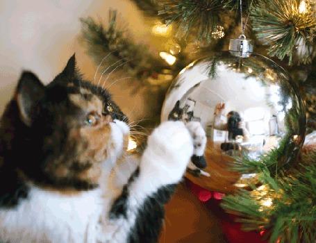 Анимация Кот пытается дотронуться до своего отражения на блестящем шарике на елке