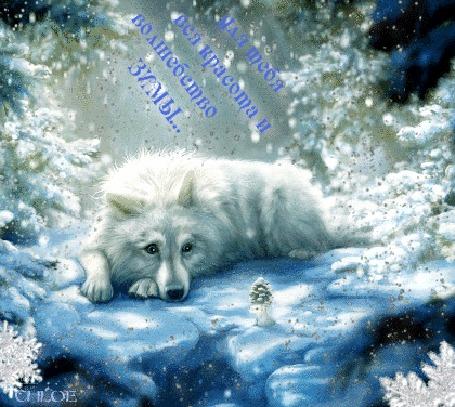 Анимация В белоснежном зимнем лесу лежит белый красивый волк, идет снежок, белая мышка держит маленькую елочку (Для тебя вся красота и волшебство зимы.), by CHLOE
