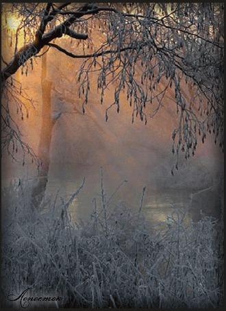 Анимация Появляющийся и пропадающий образ девушки на фоне березы в инее, природы, заката Солнца, автор Лепесток