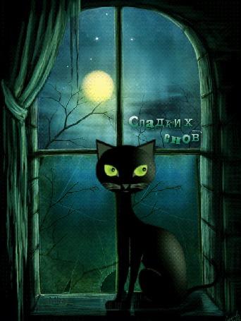 Анимация Черный кот сидит в полнолуние на окне, за разбитым стеклом которого снуют летучие мыши (Сладких снов)