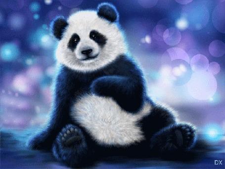 Анимация Панда сидит, моргает глазками, by dixinox