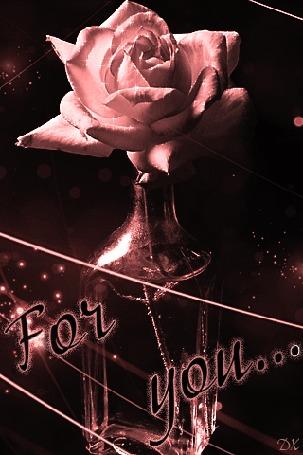 Анимация Нежно -розовая роза в бутылке (For you / Для тебя)