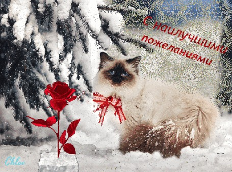 Анимация Пушистая зима, пушистый снег, пушистая ель и красивая кошечка, алая зимняя роза крутится (С наилучшими пожеланиями)