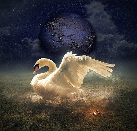 Анимация Белый лебедь посреди поля в брызгах воды, на фоне планеты и звездного неба
