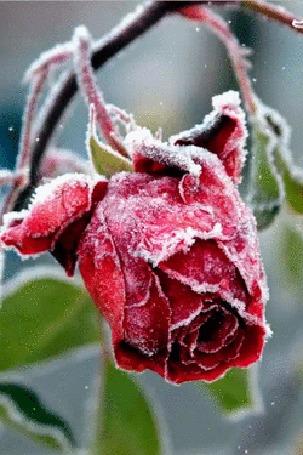 Картинки яркой зимы и падающего снега