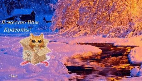 Анимация Красивый зимний пейзаж, течет небольшая речушка, сыплет снежок, на берегу в коробке выглядывает котик, вдали виднеется домик, деревья красиво подсвечены вечерним светом,(Я желаю Вам Красоты!)