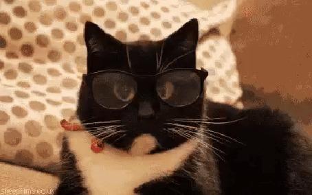 Анимация Черный кот в очках с увеличенными глазами