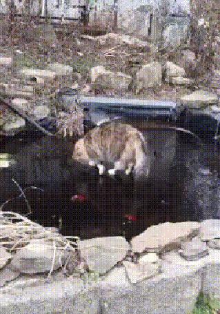 Анимация Зимняя рыбалка-кот гоняется за рыбами, плавающими подо льдом