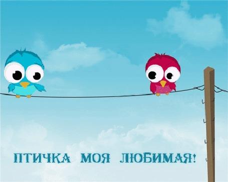 Анимация Две влюбленные птички голубая и розовая сидят на проводах, излучая сердечки (ПТИЧКА МОЯ ЛЮБИМАЯ!)