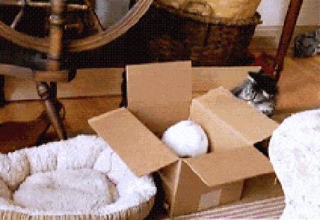 Анимация Кот бьет лапой кролика, который сидит в коробке