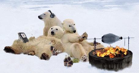 Анимация Белые медведи устроили пикник на снегу, Один слушает музыку в наушниках, другой уставился в планшет, а третий жарит пингвина на вертеле