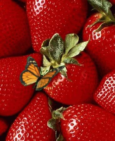 Анимация На спелую клубнику села бабочка и машет крыльями