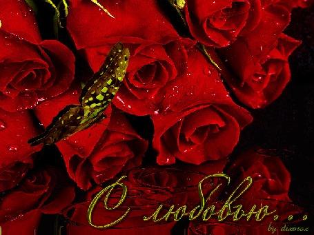 Анимация Бабочка сидит на букете красных роз (С любовью), by dixinox