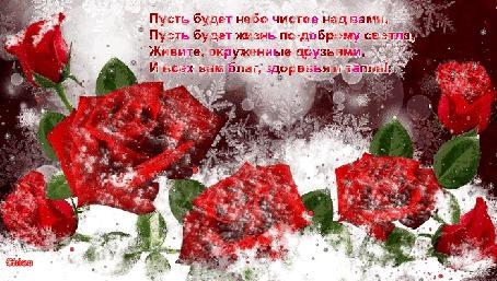 Анимация Красивые алые розы в пушистом снегу и в снежинках, идет снег (Пусть будет небо чистое над вами, пусть будет жизнь по-доброму светла, Живите, окруженные друзьями, И всех вам благ, здоровья и тепла!)