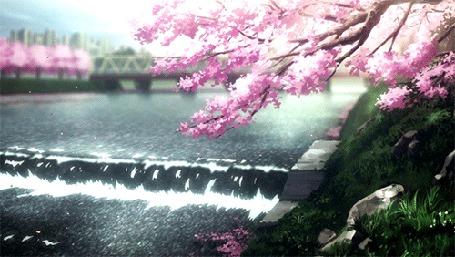 Анимация Ветки цветущей сакуры склонились над водой