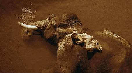 Анимация Мальчик лежит на слоне, лежащем в воде