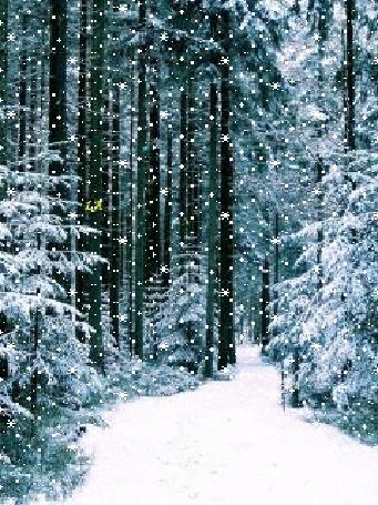 Анимация В зимнем лесу с неба тихо падает снег