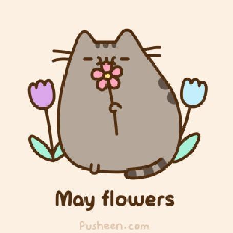 Анимация Кот Пушин нюхает цветок (May flowers / Майские цветы)