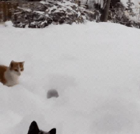 Анимация Кошка запрыгивает в сугроб