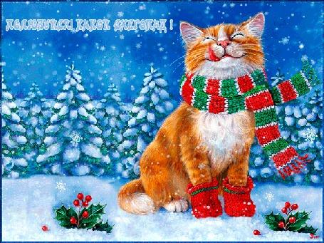 Анимация Рыжий кот в шарфе и носочках сидит под падающим снегом, (полюбуйся, какой снегопад!)