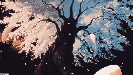 Анимация С дерева слетают и кружат весенние лепестки