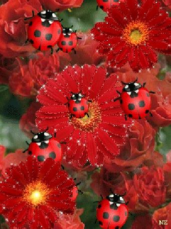 Картинки анимации красивые цветы