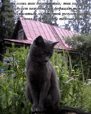 Анимация Серый кот сидит на большом пне, поворачивая голову в разные стороны, на фоне травы, цветов, крыши своего дома, (Ах эта осень так бесприютна, так холодна, скоро будет неизбежный дефицит тепла, начнем спасаться мы от этой тепло-нищеты, значит снова будут в моде теплые коты)