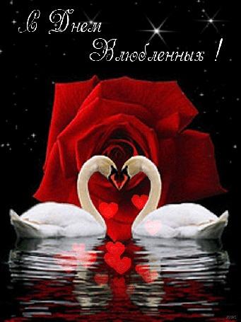 Анимация На воде два лебедя склоняются друг к другу на фоне распускающейся розы, звездного неба, всплывающих сердечек, (С днем Влюбленных!)