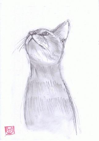 Анимация Рисованный кот шевелит ушами