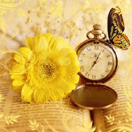Анимация Бабочка сидит на часах рядом с желтой герберой