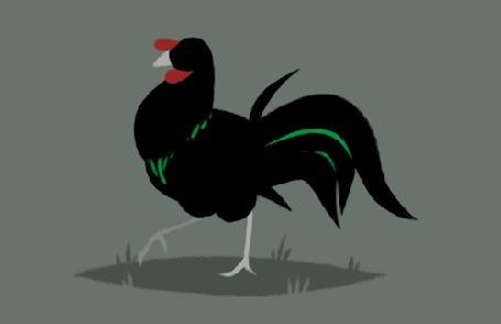Анимация Прогуливающийся черный индюк
