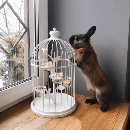 Анимация Кролик стоит у клетки и смотрит в окно