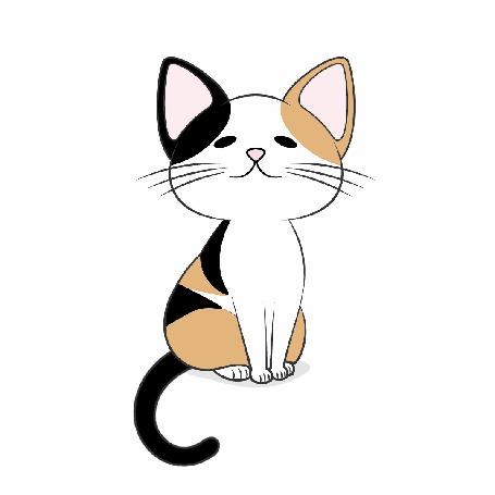 Анимация Трехцветных котенок на белом фоне