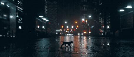 Анимация Кошка идет по пешеходному переходу, посреди улицы после дождя в ночном городе