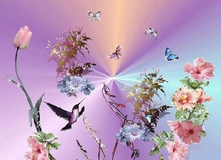 Анимация Птица колибри и бабочки над цветами, на розовом фоне