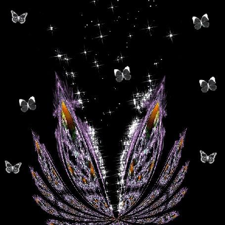 Анимация Порхающие бабочки над мерцающим цветком, на черном фоне