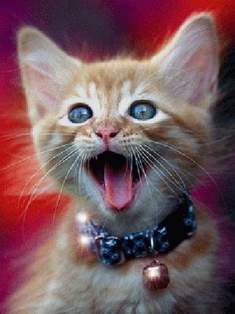 Анимация Моргающий, шевелящий ушами и носиком рыжий котенок с бубенчиком на шее