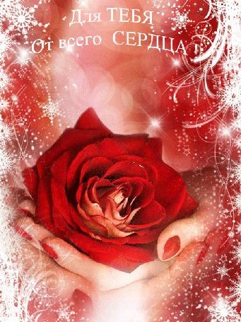 Анимация Распускающаяся роза в руках на фоне световых бликов, снежного узора (Для тебя от всего сердца)