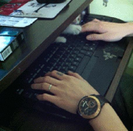 Анимация Котенок мешает парню работать на клавиатуре