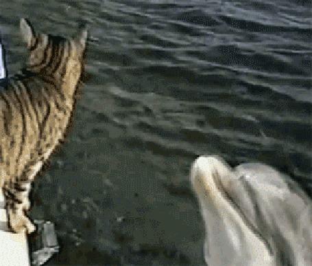 Анимация Дельфин хочет подружиться с котом